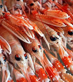 products-langoustine